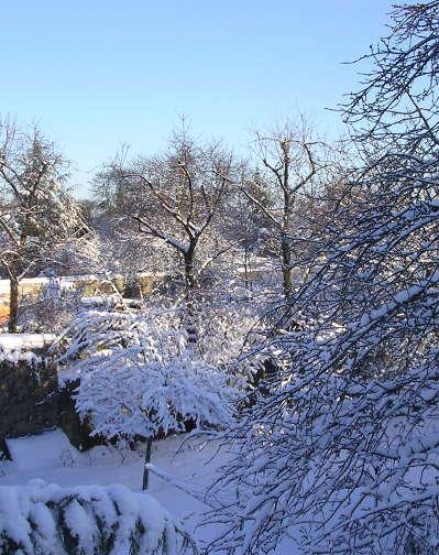 neige-verger-2191