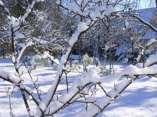 neige-verger-2204