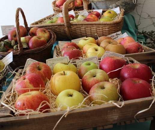 Stockage des fruits