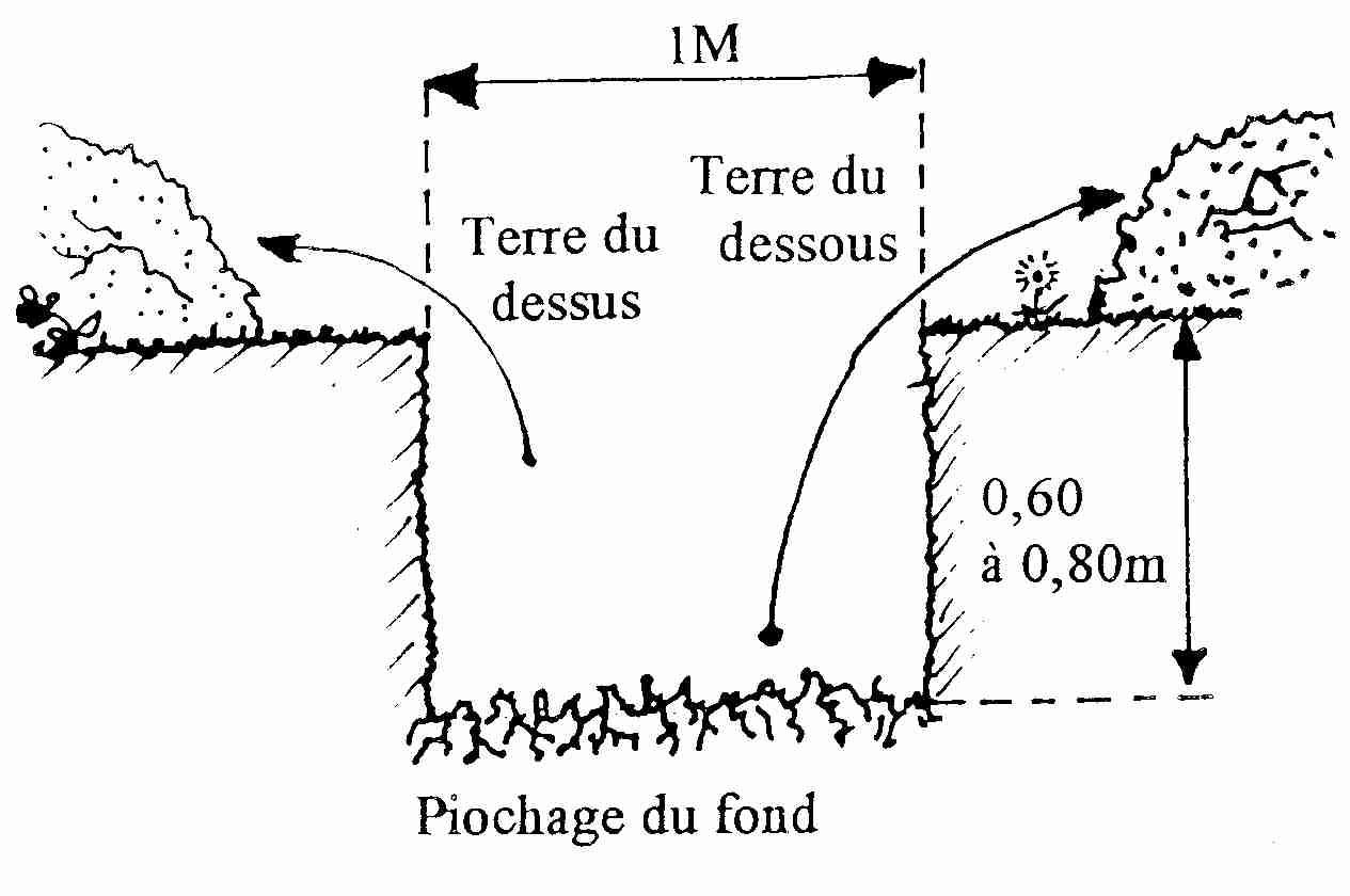 Comment Planter Un Arbre Fruitier croqueurs de pommes d'Île de france - page de novembre 2011